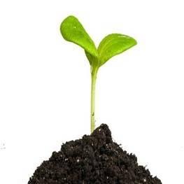 Crecimiento de plantas