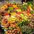 Foco carril CRONOLUX CREE led, 35W, Verduras