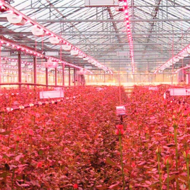 Bombilla LED PAR30 para crecimiento de plantas, E27, 30W, PLANT GROW