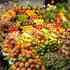 Tubo LED DC12V, IP65, 9W, 60cm, Frutas y Verduras